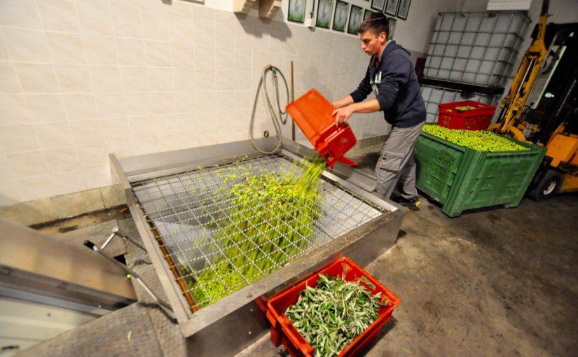 Stiskanje olivnega olja