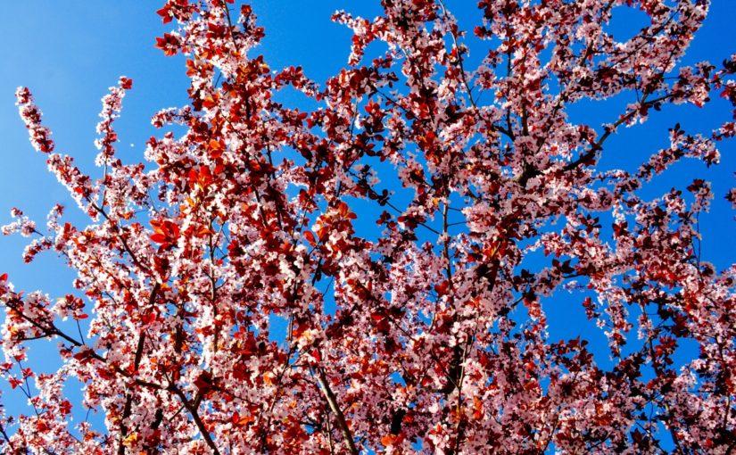 Pomlad in slovo