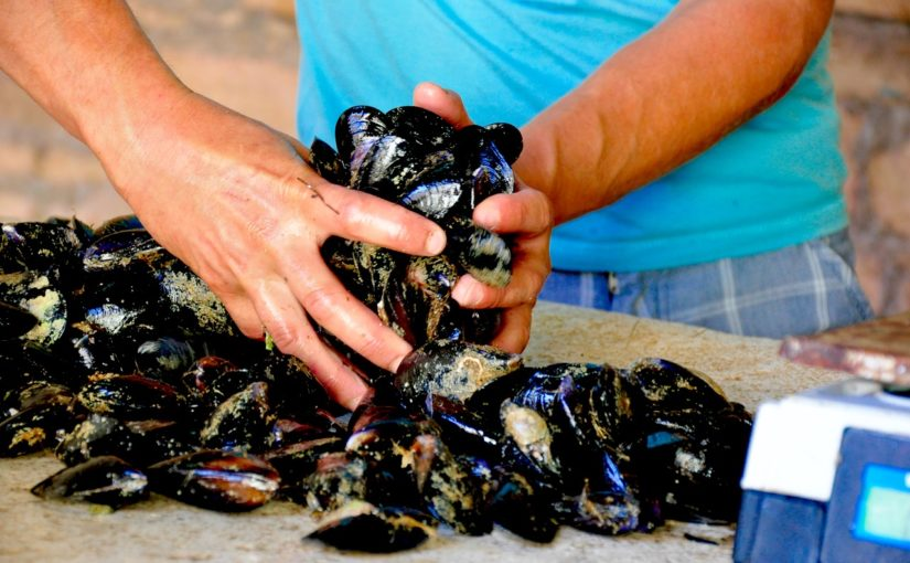 Na tržnico in po ribe v Velo Luko